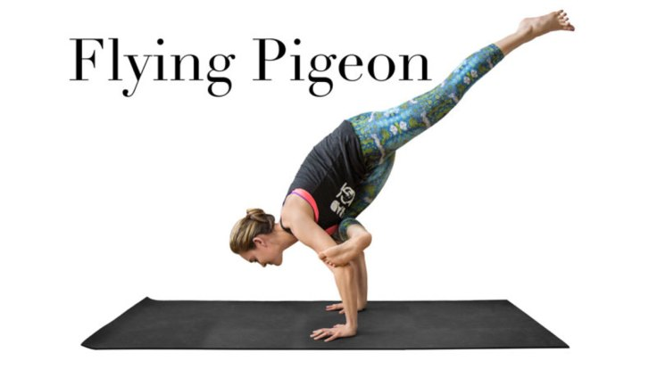 flying_pigeon